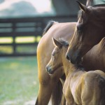 Mare_and_Foal-0441_22874[1]